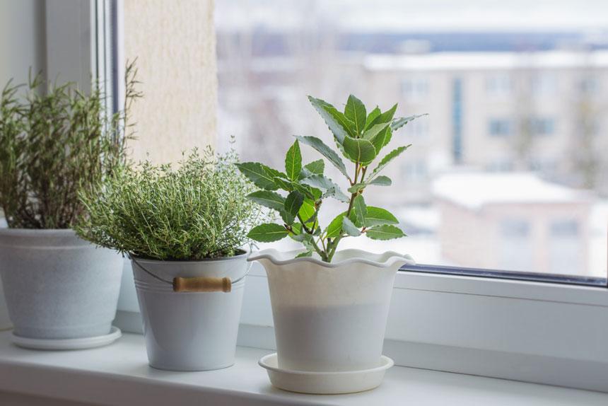 Plantes d'intérieur déco naturelle